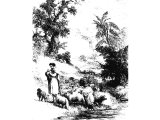 An eastern shepherd leading his flock